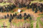 Набор сосен высотой 6 см. (10 шт.)