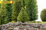 10 см. макет дерева